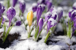 spring-thaw_28698988-670x446