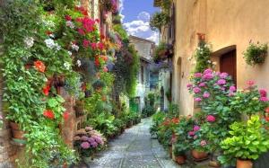 1680x1050-Cobble-Stone-Street-Italy
