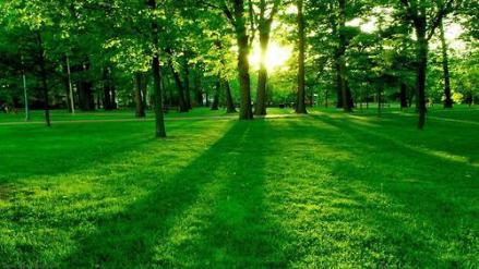 freshcutgrass