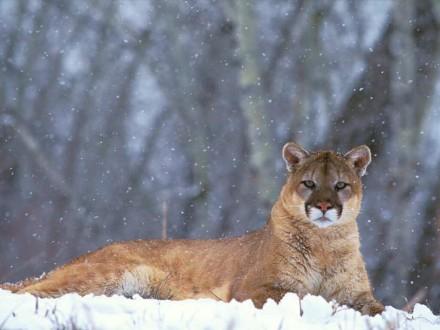 image from bergoiata.org